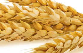 ポリアミン(小麦由来)